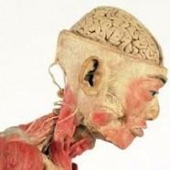 Les corps à l'oeuvre…  L'Artothèque Nouméa